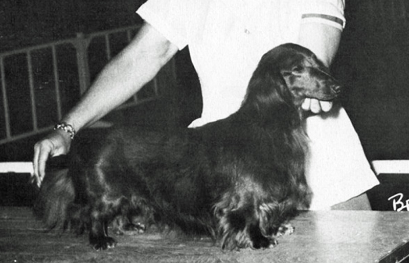 Ch Felix Of Thorn Pines Rom The Dachshund History Project