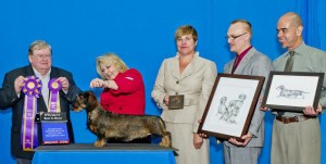 GCH DC Camridge Love Is Boreas winning BISS under Breeder Judge David Loring Brown, Handler is Co-Owner Tracy Olson. Looking on is co-owner Gail Tutt , and breeders Storm Ilouno and Roland Herandez