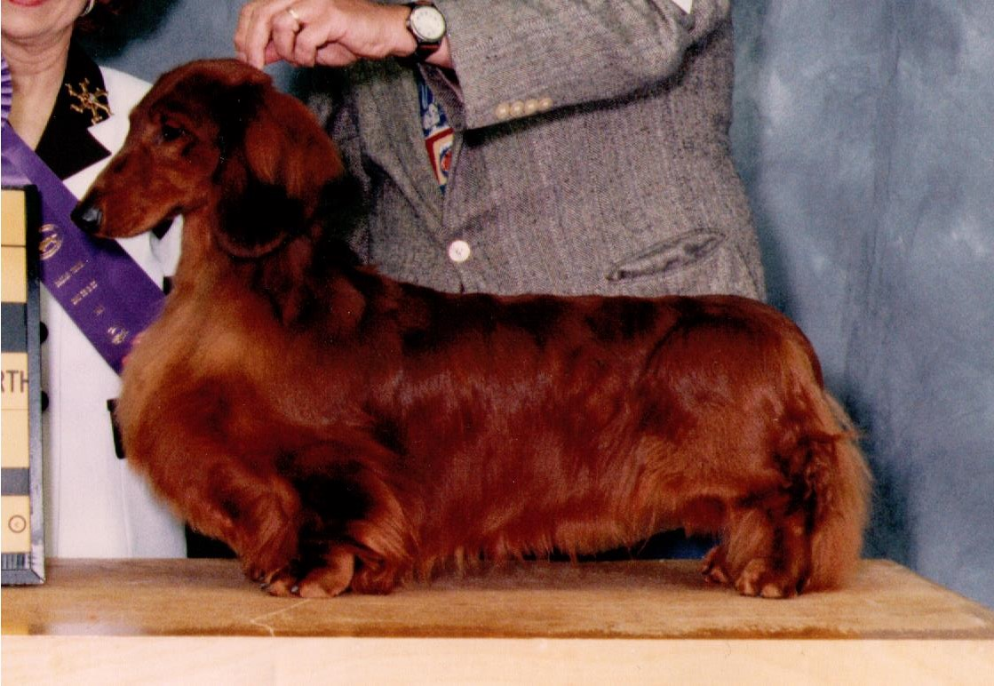 The Longhaired Variety The Dachshund History Project